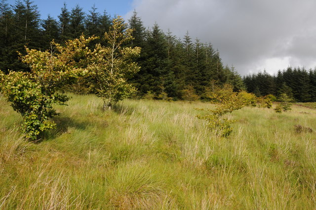 Forestry beside the B4391
