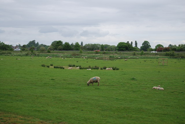 Sheep in the Adur Valley