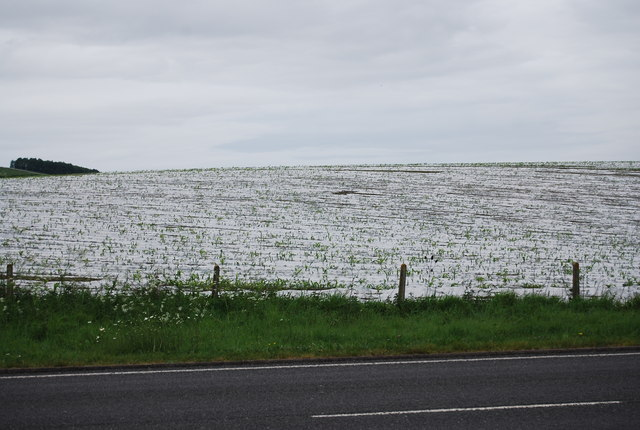 Plastic covered field