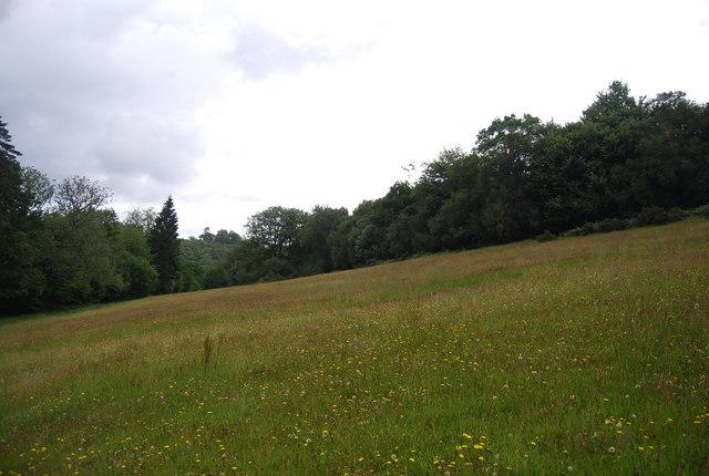 Grassy slope, Valewood Park