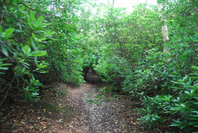 Serpent Trail, Chase Wood