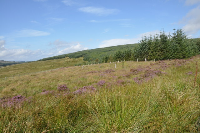 Forest Boundary, North East of Gartavaich, Kintyre
