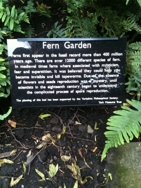 Information sign, Fern Garden, Museum Gardens, York