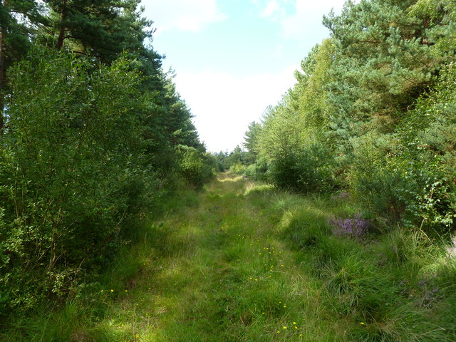 Week, forestry track
