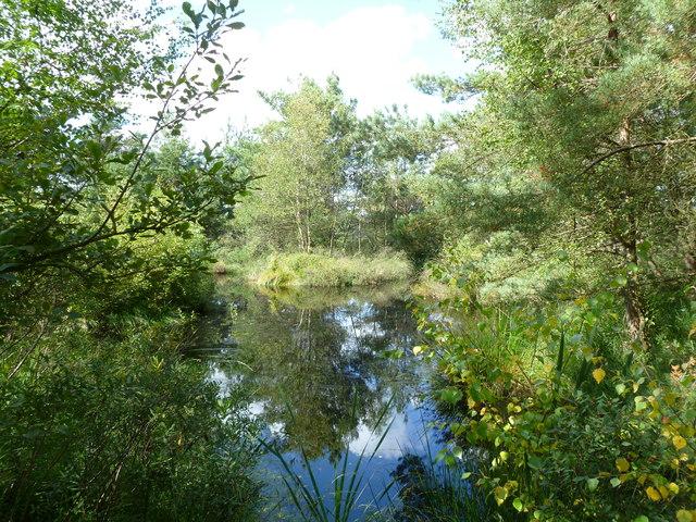 Week, pond