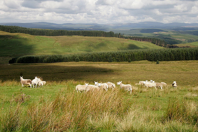 Rough grazing on Pleamoss Hill