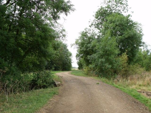 Track through Evedon Wood