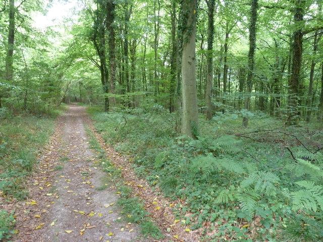Bridleway in Nightingale Wood