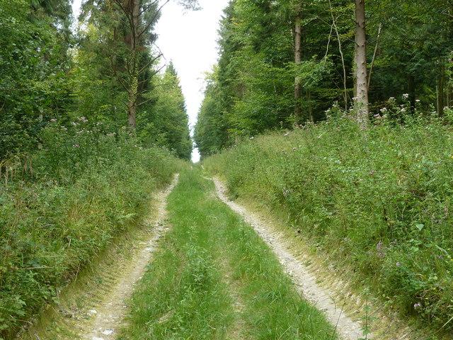 New Lipchis Way north to Heyshott Down