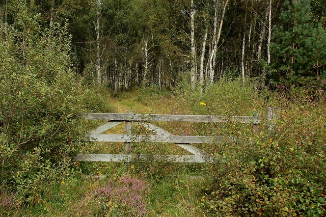 Baddengorm Wood