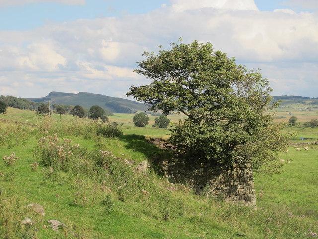 Farmland south of Alloa Lea