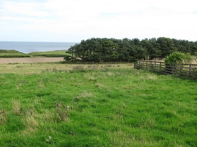 Field, Dunstan Steads