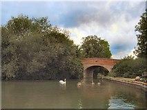 SU7451 : Colt Hill Bridge by Paul Gillett
