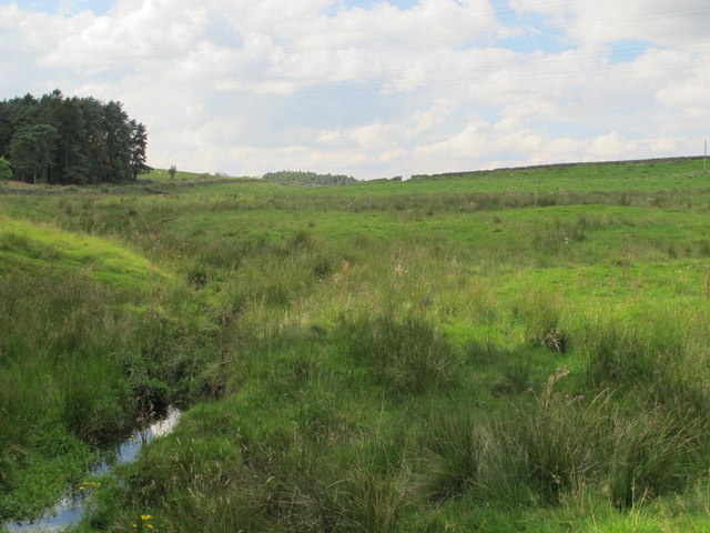 Rough pastures around Painsdale Burn