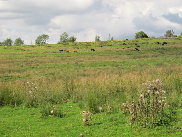 Rough pastures west of Hardriggs