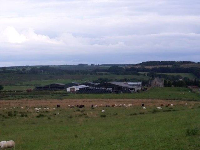 Dyke Farm, animals grazing