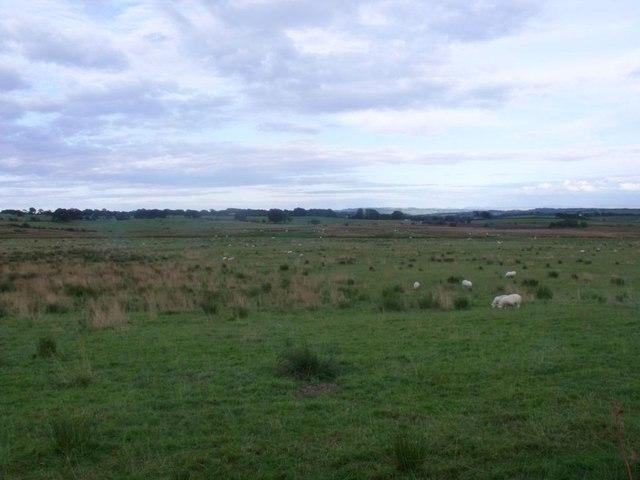 Dyke, rough grazing