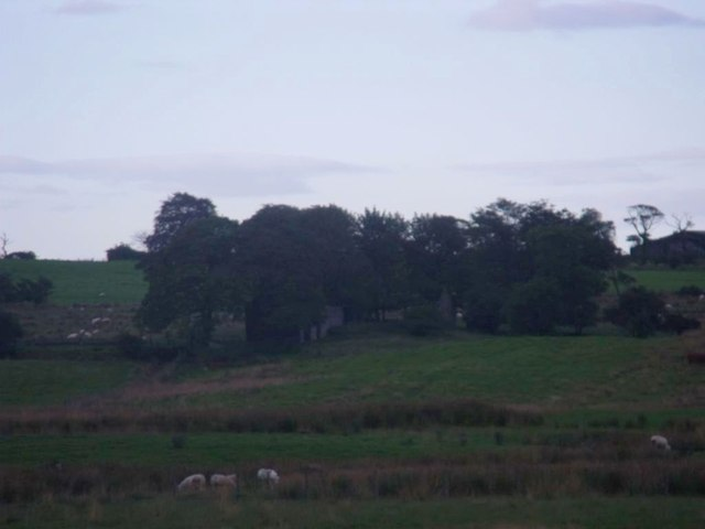 Laigh Stanerig, rough pasture