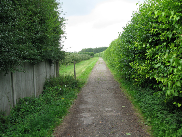 Bridleway and farm track through orchards