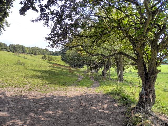 Path to Goyt Valley, Lower Bredbury