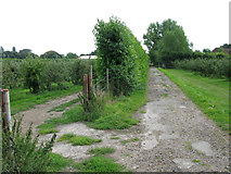 TR3256 : Bridleway through orchards by Nick Smith