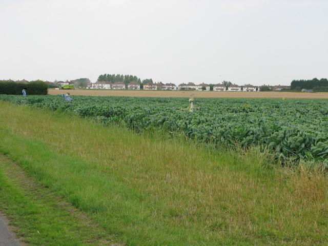 View across farmland near John's Green