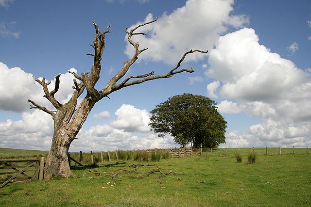 Farmland at Carterton Hill