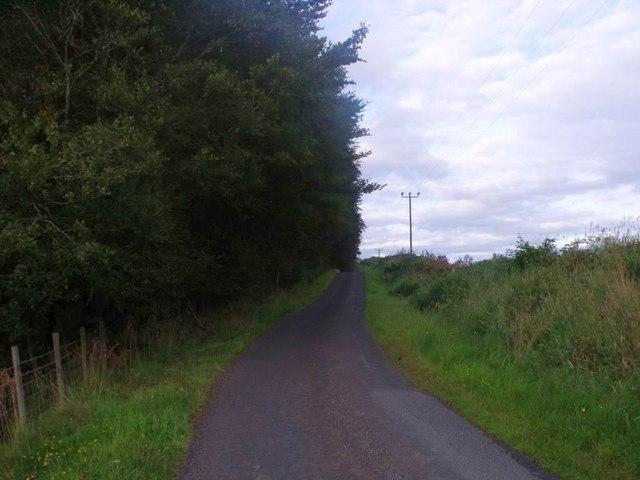 Oakersdykes, overgrown plantation