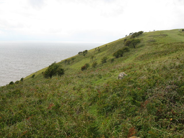Scrubland on the south side of Brean Down
