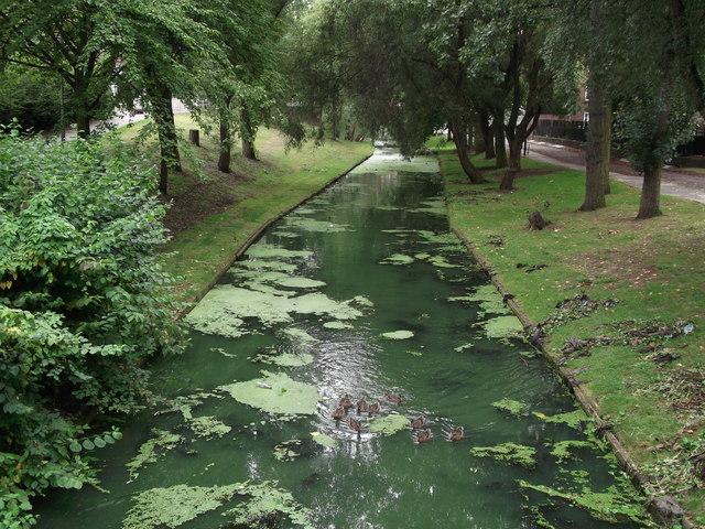 Ducks in the Crossway River