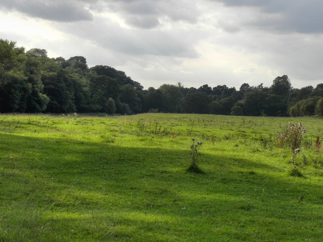 Meadow above Lady Brook