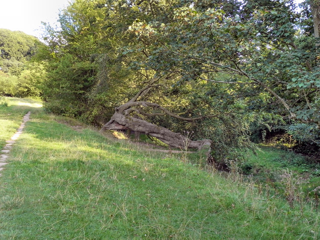 Trees on the Bank of Lady Brook