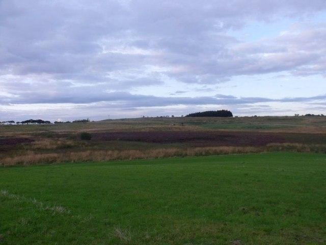 Shortrig, pasture