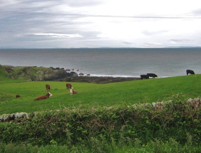 Cattle on a hillside