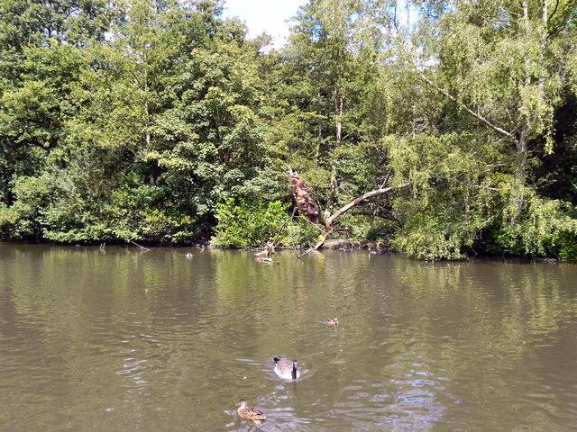 Bramall Park Lake