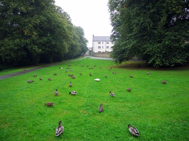 Grand day for ducks, Demesne Mill picnic area