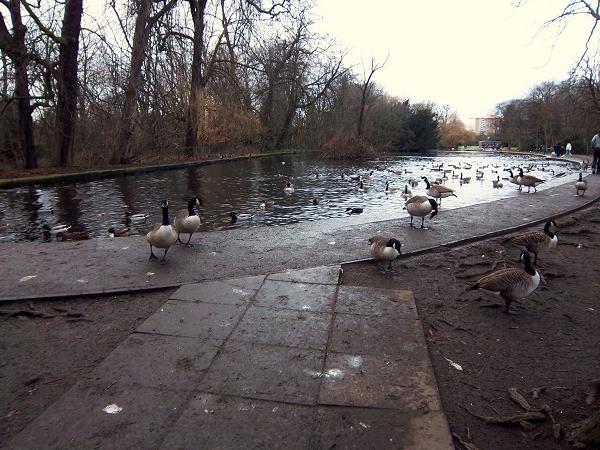 Wild fowl Lake, Thornes Park, Wakefield