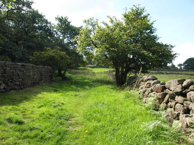 Bridleway by Renton Wood
