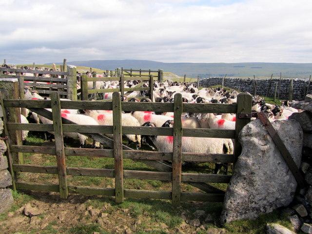 Sheep Pens below Hawkswick Clowder