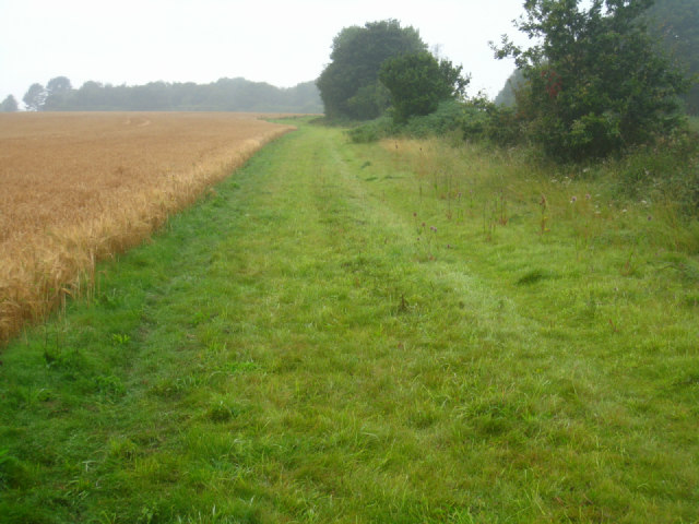Uncultivated field boundary