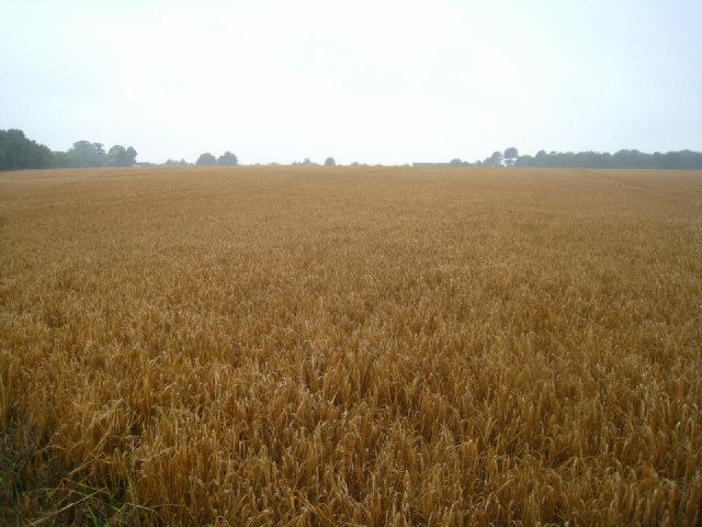 Field by St John's Road