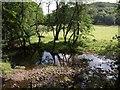 SE1851 : River Washburn at Timble Beck confluence by Derek Harper