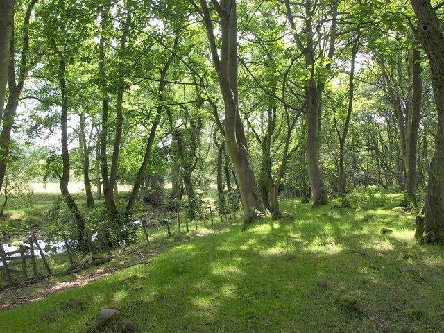 Ellers Wood