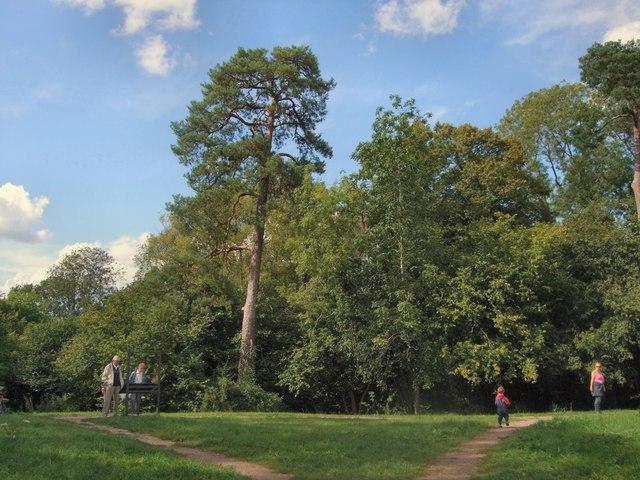 Trees near Odiham Castle
