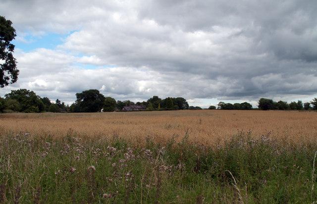 Field near Quarry Bank Mill