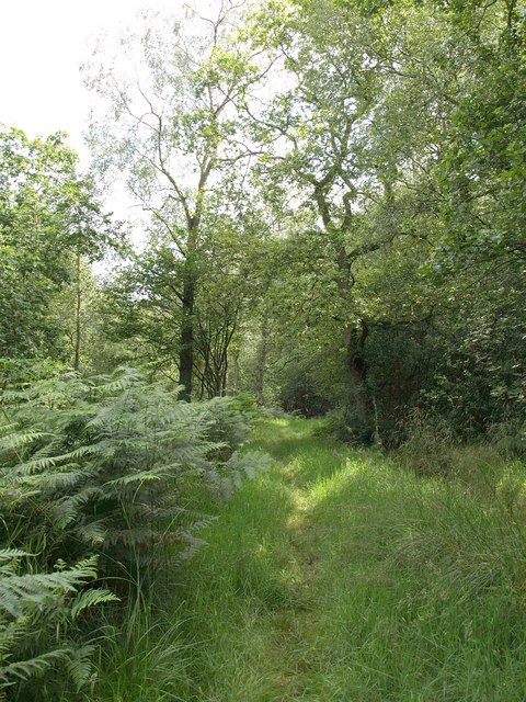 Dobpark Wood