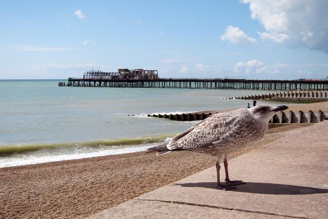 Gull by White Rock Road promenade