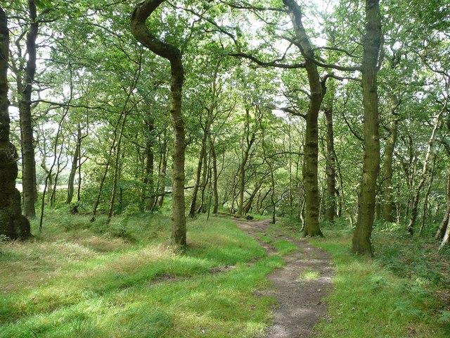 Path in Wilson's Wood, Otley