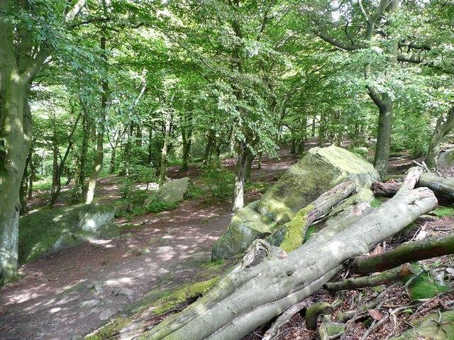 Footpath and fallen tree in Wilson's Wood, Otley