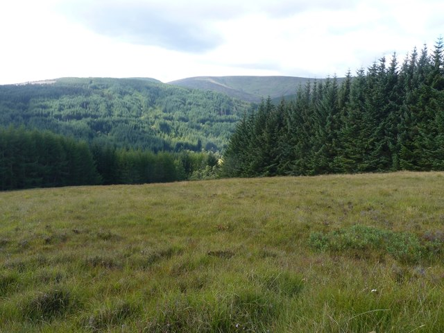 Looking into gap between forestry plantations